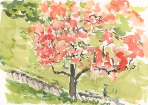 Tom Carment's 'Flame Tree'