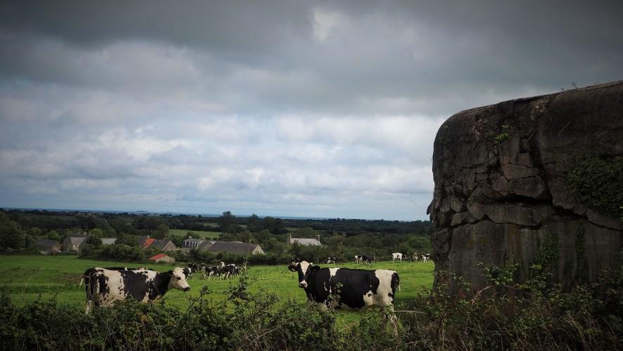 French cows, Nazi pillbox