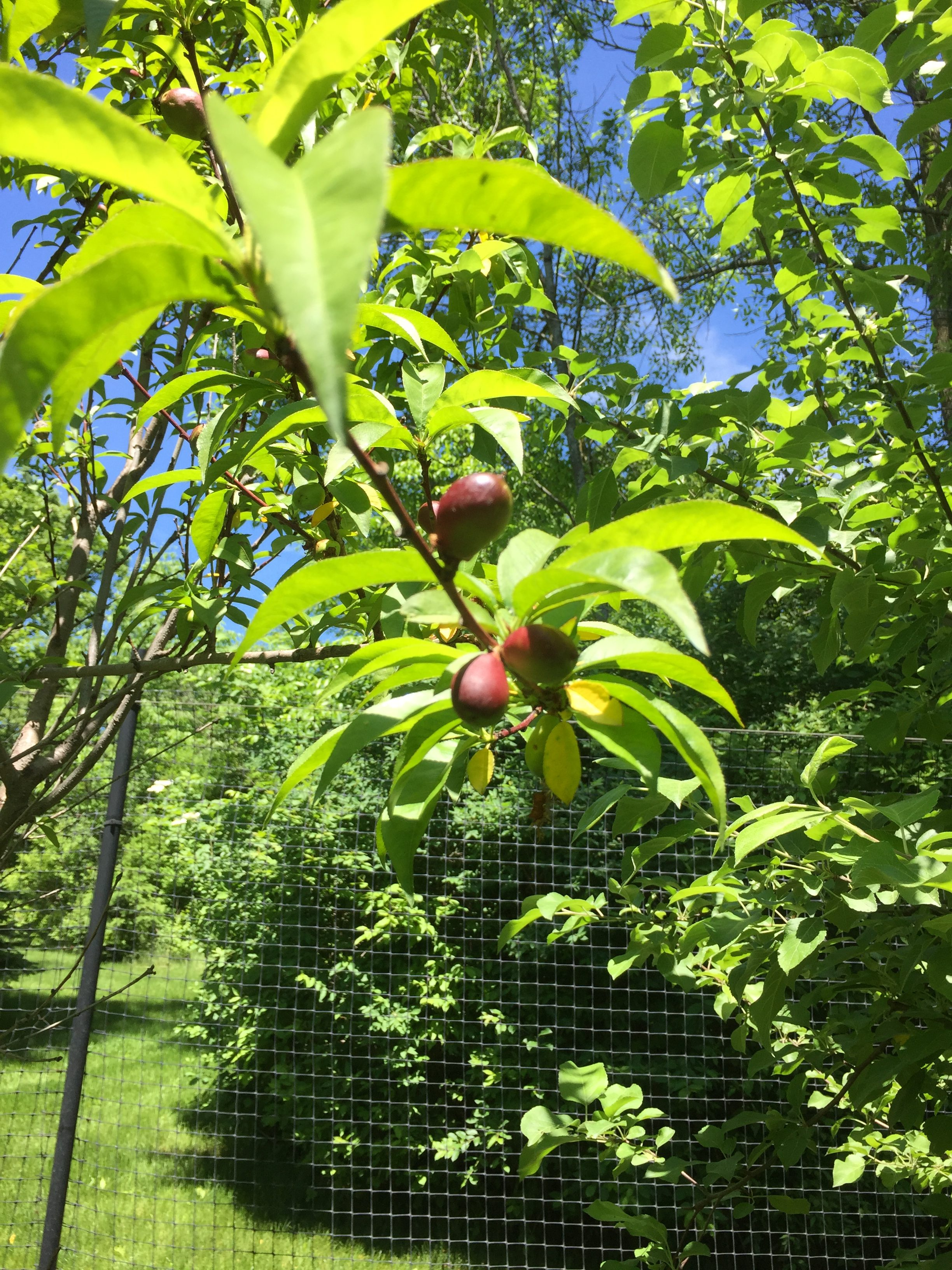What's in the Orchard: Great Fruit Trees for Cold-Weather Climates