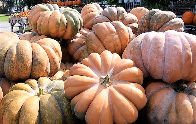 Beautiful Varieties of Pumpkins