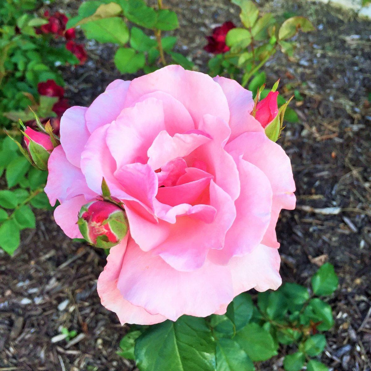 flowers 3 (3)