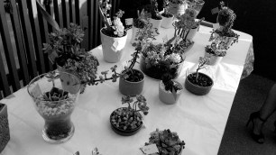 A variety of arrangements of succulents