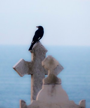 Currawong on a cross.