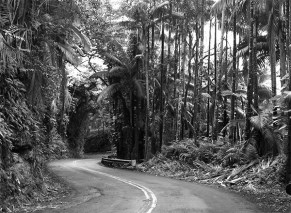 A scenic road near Hilo, Hawaii, 2010.