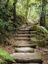 Stone stairs meander through the forest.