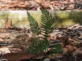 Small ferns growing on the forest floor.