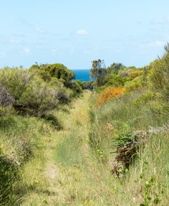 The ocean at the end of the trail.