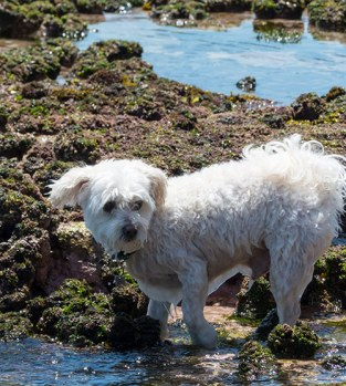 small-dog-big-waves-2a
