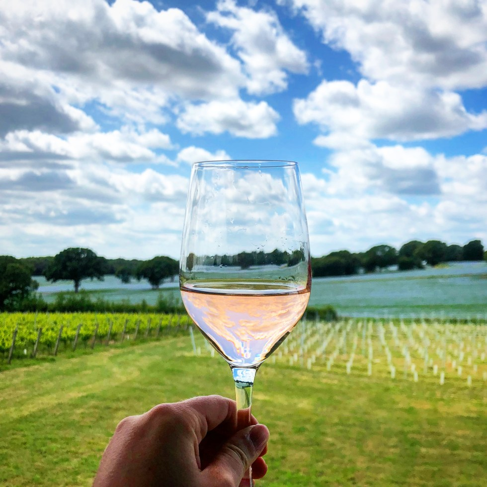 A glass of Great British Rose in the vineyard where it was grown on a beautiful summers day.