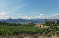 Serendipity Winery, also located on the Naramata Bench, was one of the prettiest vineyards I visited.
