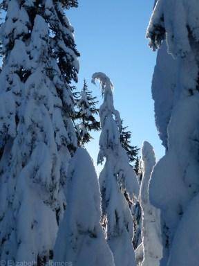 Cypress Snowy Trees 4
