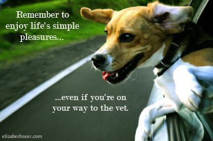 dog_simplepleasures