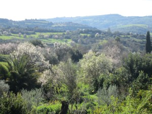 View from the deck of Tsangarides Winery, Lemona