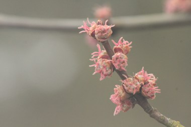 The attractive buds and blossom.