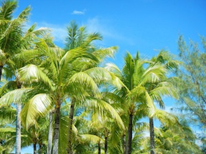 PalmTrees-300x225