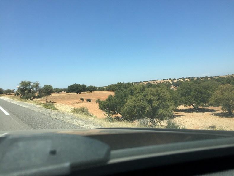 Foto da Estrada no Marrocos, vendo o pé de cabra. árvore de Argan e o pé de Cabra enfim enquanto então entretanto eventualmente igualmente inegavelmente inesperadamente mas outrossim pois porquanto porque portanto posteriormente precipuamente primeiramente primordialmente principalmente salvo semelhantemente similarmente