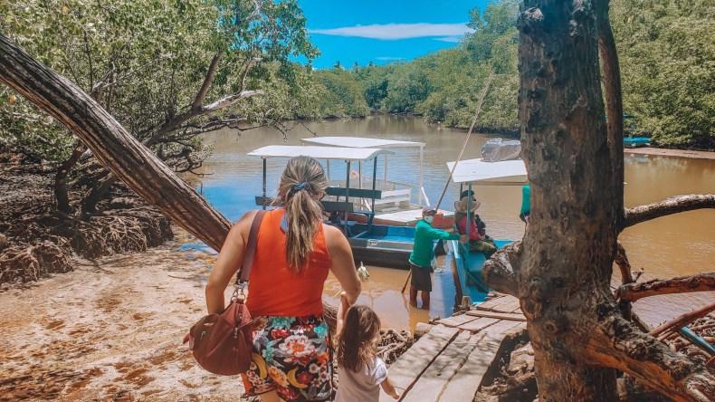 turismo de observação do peixe-boi