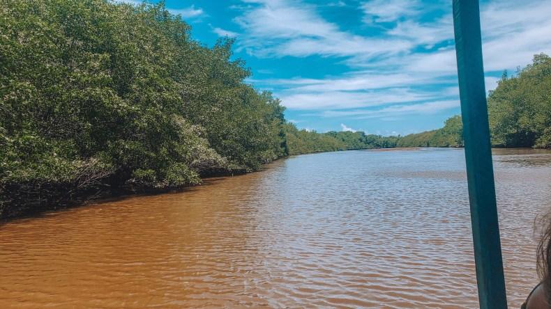 rio tatuamunha, habitat do peixe-boi