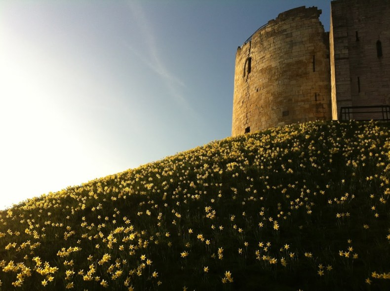Flores em York na Inglaterra
