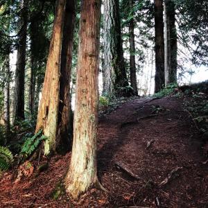 Cougar Trails, Vancouver, Washington