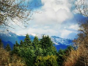 Fresh snow in the Cascades