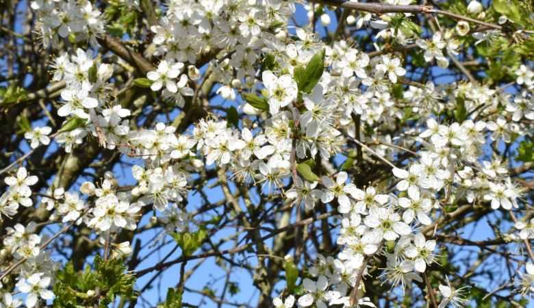 sunny apple garden leaf