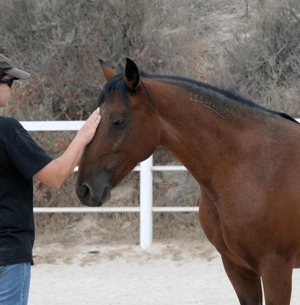 elizabeth-zarkos-horsemanship-gypsy
