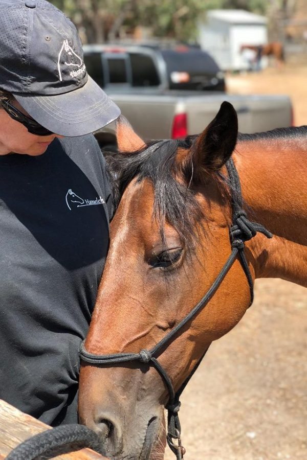 equine-training-orange-county