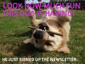 subscribe to elizaflynn newsletter