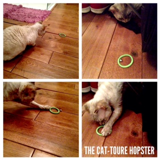 Cat-toure Hopster review