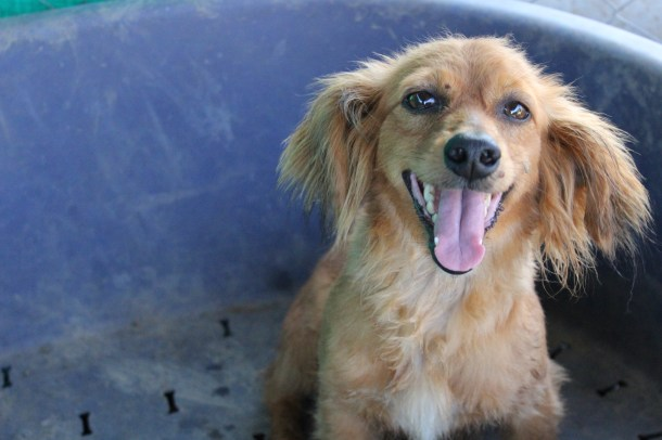 Saving Pound Dogs Cyprus Dog Rehoming