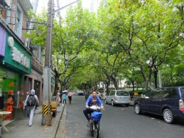A classic image of the French Concession in central Shanghai. I'd know those twisted trees anywhere!