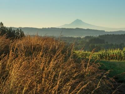 Mount Hood from Five Mountain Vineyard