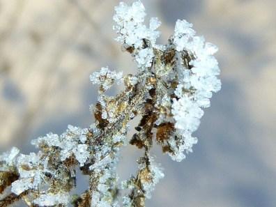 Kristallblume