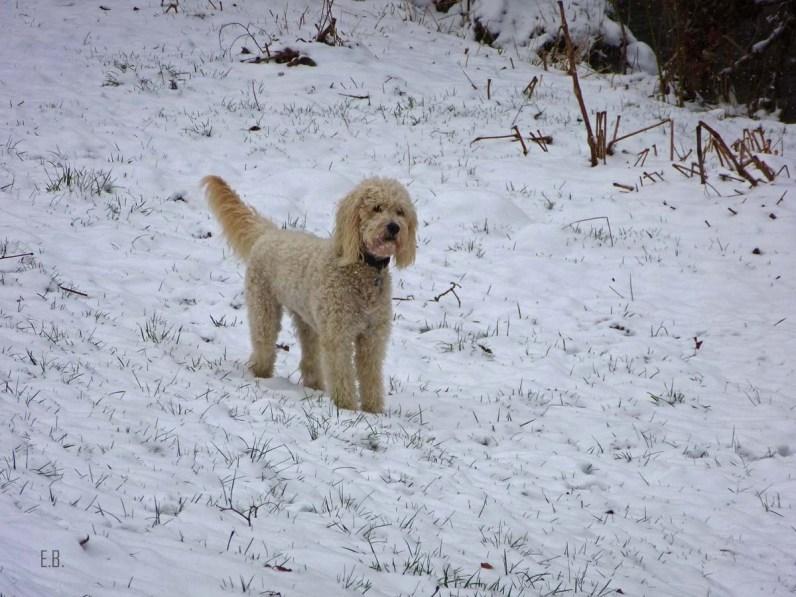 Ein Eisbärhund