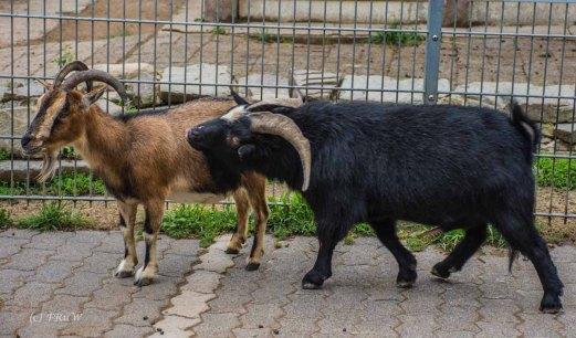 TierparkReuschenberg_0115
