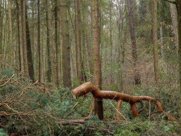 Wildpark_HoehenfelderSee_DellbrueckerHeide (29)