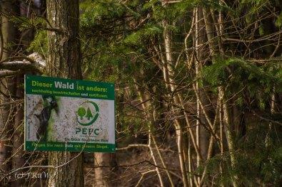 Hier, aber auch sonst überall, ist Wald etwas besonderes