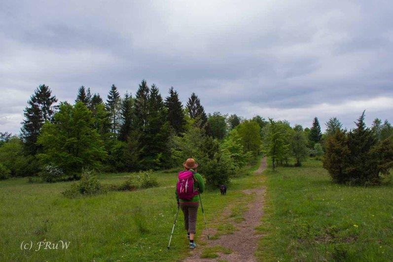 Gerolsteiner Felsenweg (137)