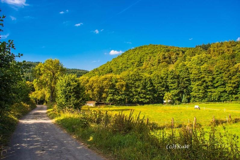 wacholder_ginster_-pilgerpfade-bei-st_-jost-266