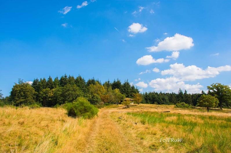 wacholder_ginster_-pilgerpfade-bei-st_-jost-72