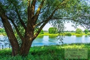 Maasufer