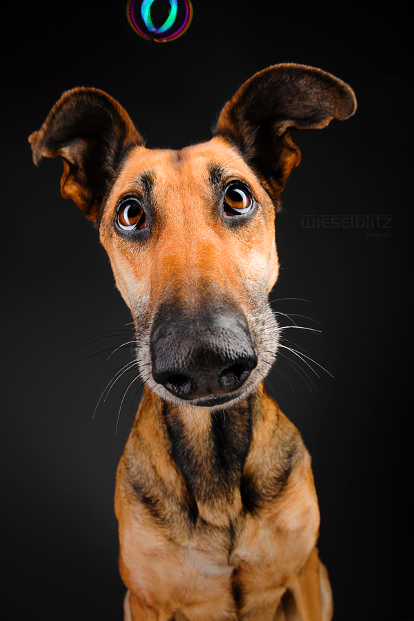 Goofy Goobers  Commercial pet photography by Elke