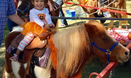 Elk Grove Giant Pumpkin Festival Draws Large Crowds