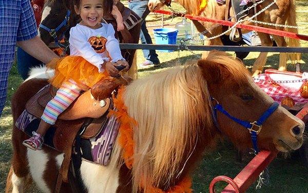 Elk Grove Giant Pumpkin Festival Draws Large Crowds