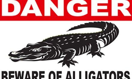 Alligator Spotted In Camden Lake Of Elk Grove