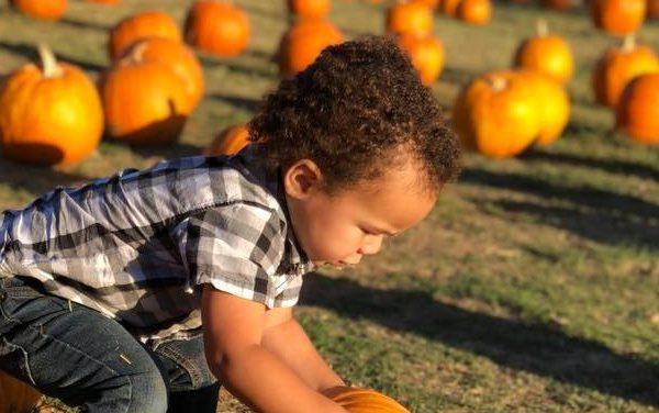 It's Pumpkin Picking Season!