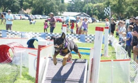 A Doggy Blast At Pet-A-Palooza