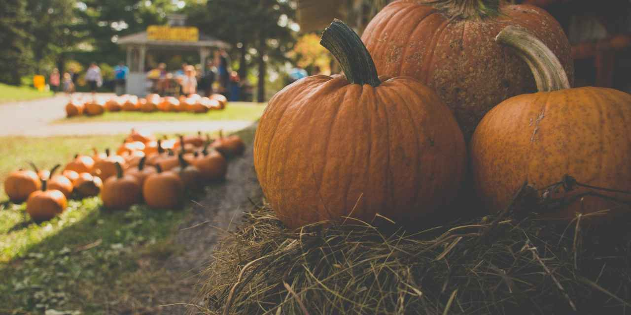 Elk Grove Pumpkin Festival Canceled Due To Covid-19 Concerns