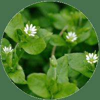Herb News